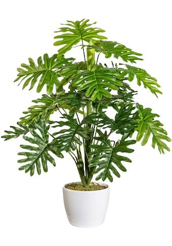 andas Künstliche Zimmerpflanze »Agneta«, im Keramiktopf kaufen