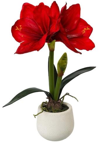Kunstblume »Amaryllis« (1 Stück) kaufen