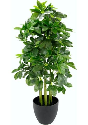 I.GE.A. Kunstpflanze »Schefflerapflanze«, im Kunststofftopf kaufen