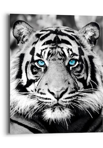 Reinders! Holzbild »Blue Eyed Tiger«, (1 St.) kaufen