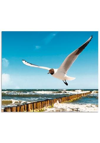 Artland Küchenrückwand »Ostsee« kaufen