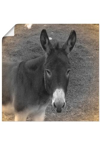 Artland Wandbild »Esel Kontakt« kaufen