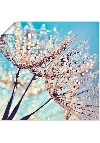 Artland Wandbild »Pusteblume Tröpfchenfänger« kaufen