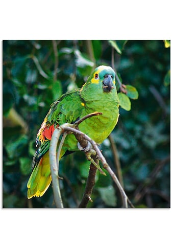 Artland Glasbild »Blaustirnamazone«, Vögel, (1 St.) kaufen