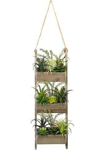 Creativ green Künstliche Zimmerpflanze »Holzdekoleiter mit Sukkulenten« kaufen