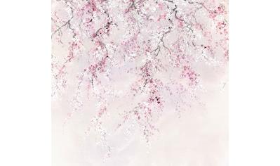 Komar Fototapete »Vliestapete Kirschblüten«, bedruckt-geblümt-floral-realistisch, 300... kaufen