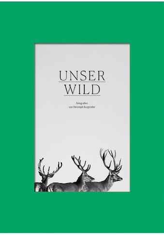 Buch »Unser Wild / Christoph Burgstaller, Sepp Forcher« kaufen