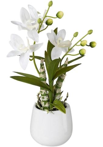 Creativ green Kunstpflanze (1 Stück) kaufen
