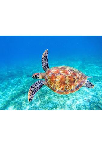 Papermoon Fototapete »Big Green Sea Turtle« kaufen