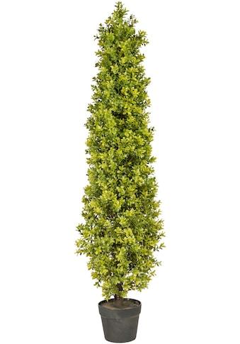Creativ green Kunstpflanze »Buchsbaumpyramide«, im Kunststofftopf kaufen