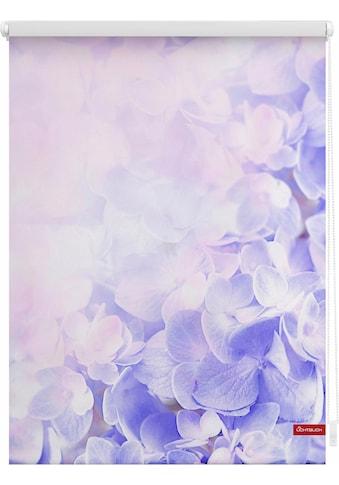 LICHTBLICK Seitenzugrollo »Klemmfix Motiv Hortensie«, Lichtschutz, ohne Bohren,... kaufen