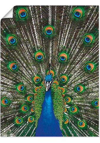 Artland Wandbild »Pfau«, Vögel, (1 St.), in vielen Größen & Produktarten... kaufen