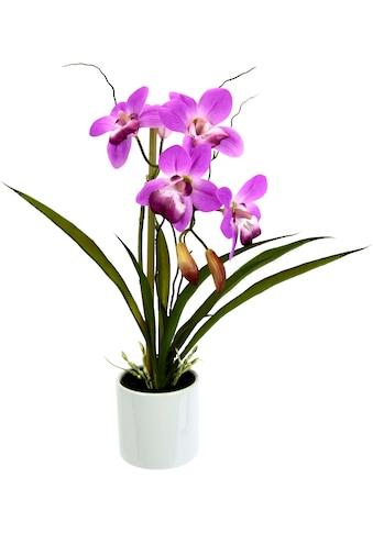 I.GE.A. Kunstorchidee »Orchidee« (1 Stück) kaufen