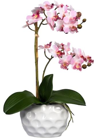 Creativ green Kunstorchidee »Phalaenopsis«, in Keramikvase kaufen
