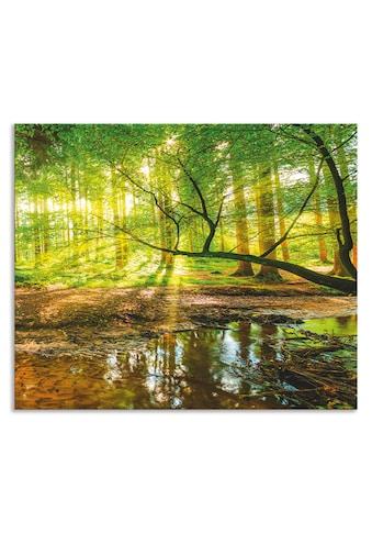 Artland Küchenrückwand »Wald mit Bach« kaufen