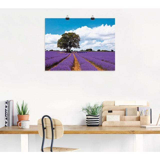Artland Wandbild »Schönes Lavendelfeld im Sommer«