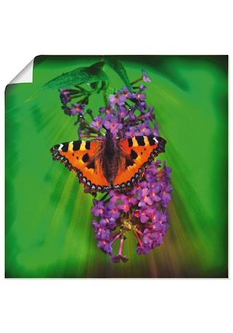Artland Wandbild »Kleiner Fuchs im Sonnenstrahl«, Insekten, (1 St.), in vielen Größen... kaufen