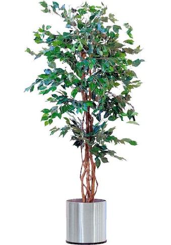 Schneider Kunstpflanze »Ficus Benjamini« kaufen