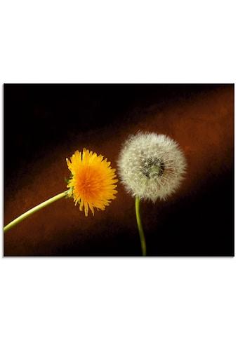 Artland Glasbild »Pusteblume Löwenzahn«, Blumen, (1 St.) kaufen