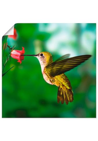 Artland Wandbild »Kolibri« kaufen