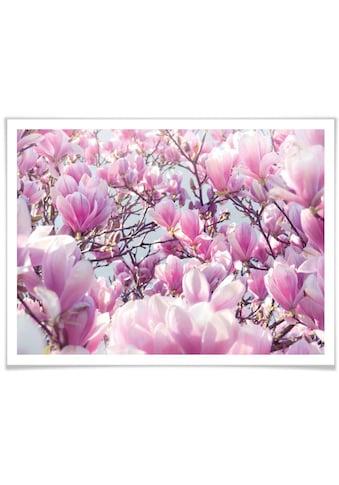Wall-Art Poster »Magnolienbaum«, Baum, (1 St.) kaufen