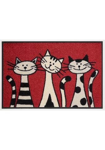wash+dry by Kleen-Tex Fußmatte »Three Cats«, rechteckig, 9 mm Höhe, Fussabstreifer,... kaufen
