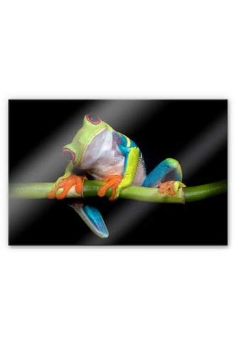 Wall-Art Küchenrückwand »Spritzschutz Frisch Green Frog« kaufen