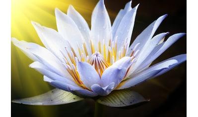 Papermoon Fototapete »Lotus Flower« kaufen