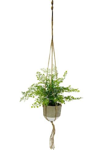 I.GE.A. Kunstpflanze »Frauenhaar«, in Hängeampel kaufen