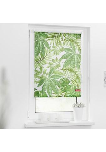 LICHTBLICK ORIGINAL Seitenzugrollo »Rollo Klemmfix, ohne Bohren, Verdunkelung, Blätter... kaufen