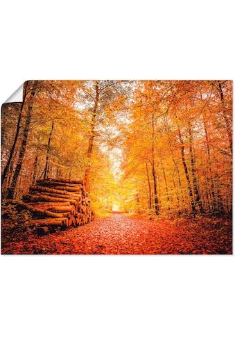 Artland Wandbild »Herbstlandschaft« kaufen