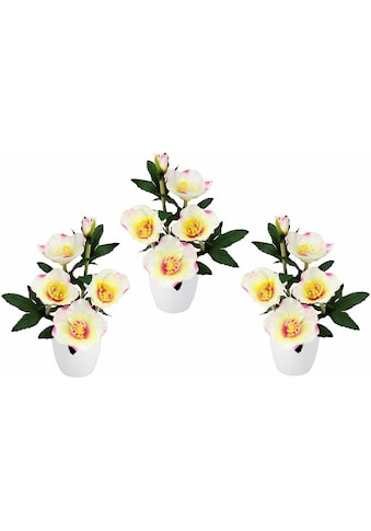 Kunstpflanze (Set, 3 Stück) kaufen