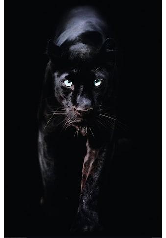 Deco - Panel »Schwarzer Panther« kaufen