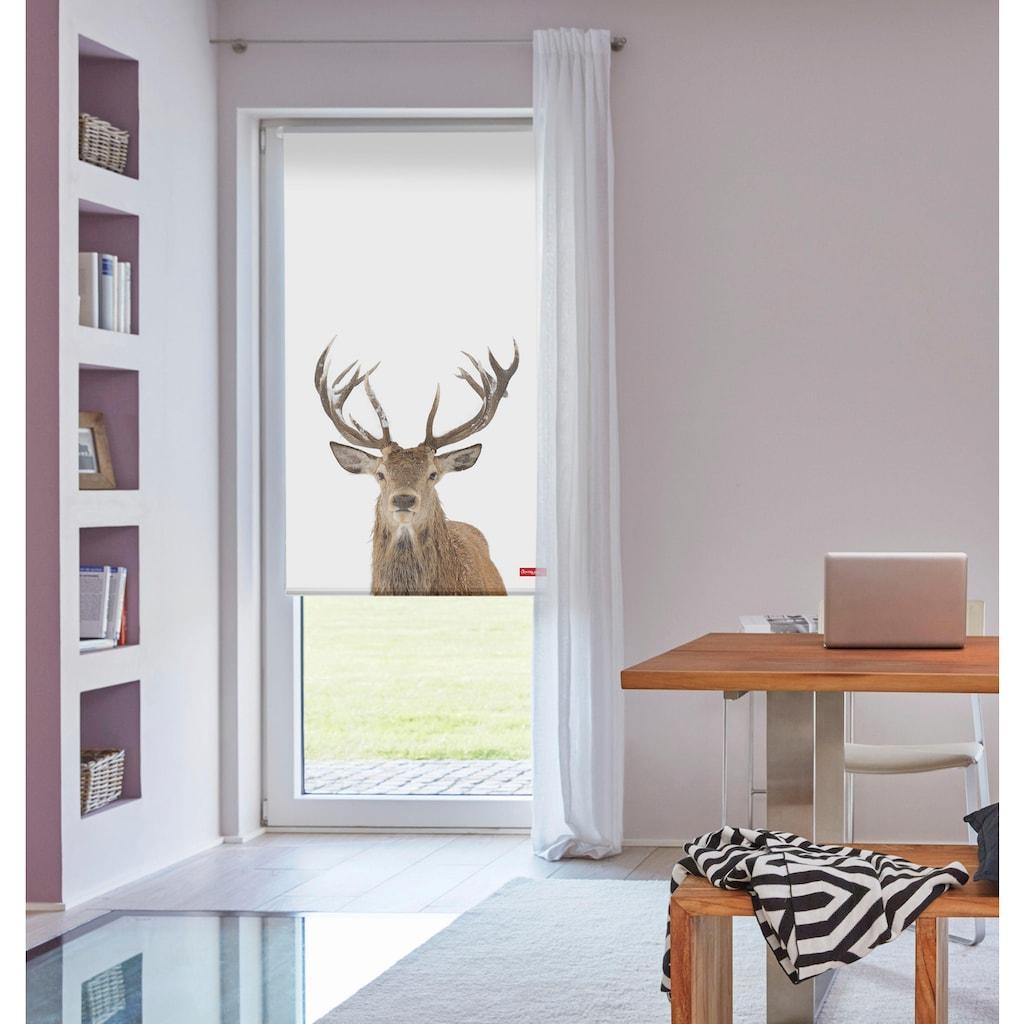 LICHTBLICK ORIGINAL Seitenzugrollo »Klemmfix Motiv Hirsch«, Lichtschutz, ohne Bohren, freihängend, bedruckt