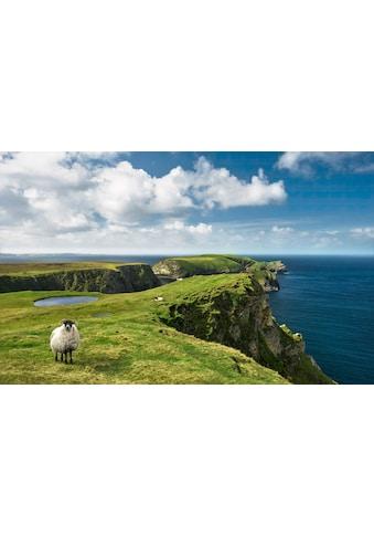 Komar Fototapete »Green Ireland«, mehrfarbig-natürlich-bedruckt kaufen