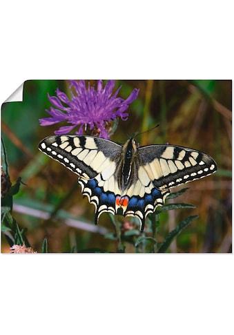 Artland Wandbild »Schwalbenschwanz im Anflug« kaufen