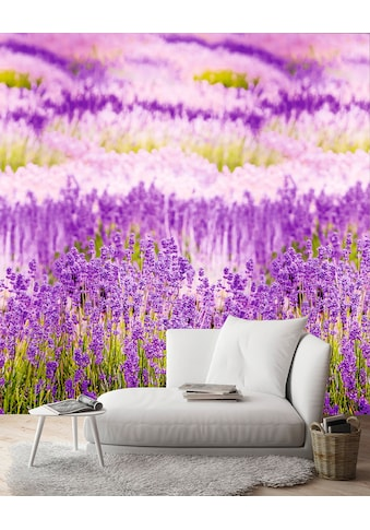 Andiamo Vliestapete »Lavendelblüten«, 1 Rolle á 3 Bahnen 159 cm x 280 cm kaufen