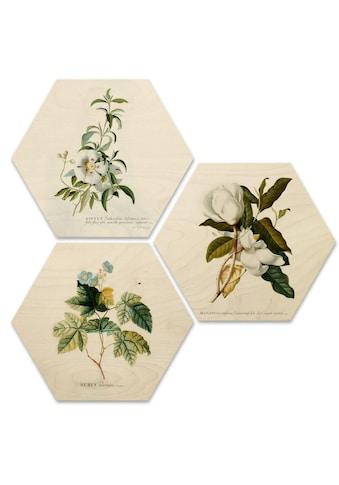 Wall-Art Mehrteilige Bilder »Botanische Collage Blumen Floral«, (Set, 3 St.) kaufen