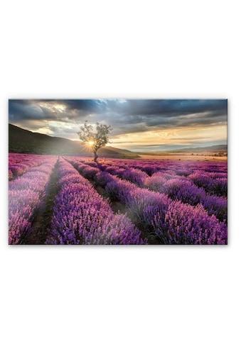 Wall-Art Küchenrückwand »Lavendel Blumen in der Provence« kaufen