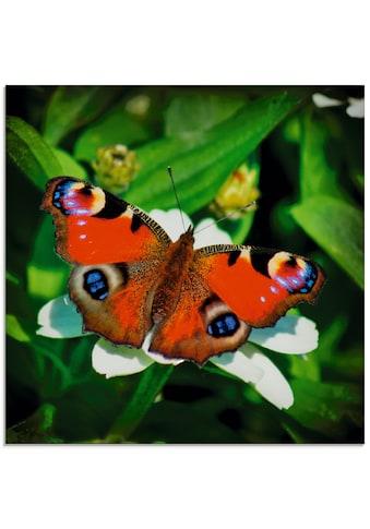Artland Glasbild »Tagpfauenauge«, Insekten, (1 St.) kaufen