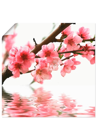 Artland Wandbild »Pfirsichblüten reflektieren im Wasser« kaufen