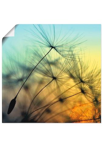 Artland Wandbild »Goldener Sonnenuntergang und Pusteblumen« kaufen
