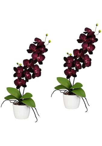 Creativ green Kunstpflanze »Orchidee Phalaenopsis«, im Keramiktopf kaufen