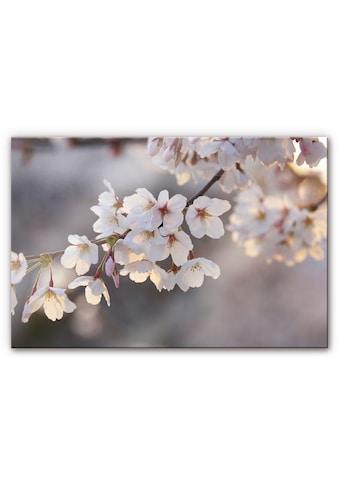 Wall-Art Küchenrückwand »Spritzschutz Kirschblütenzweig« kaufen