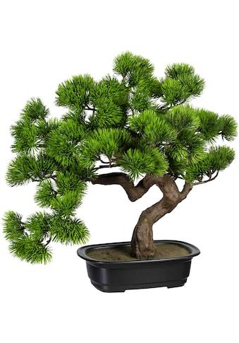 Creativ green Kunstbonsai »Bonsai Kiefer«, in Schale kaufen