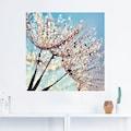Artland Wandbild »Pusteblume Tröpfchenfänger«