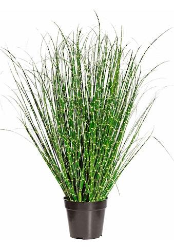 Creativ green Kunstgras »Miscanthus Zebrinus« kaufen