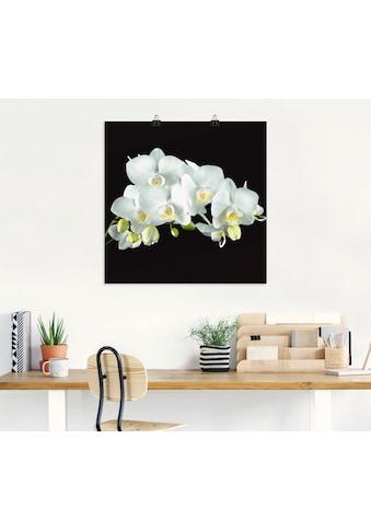 Artland Wandbild »Weiße Orchidee auf schwarzem Hintergrund«, Blumen, (1 St.), in... kaufen