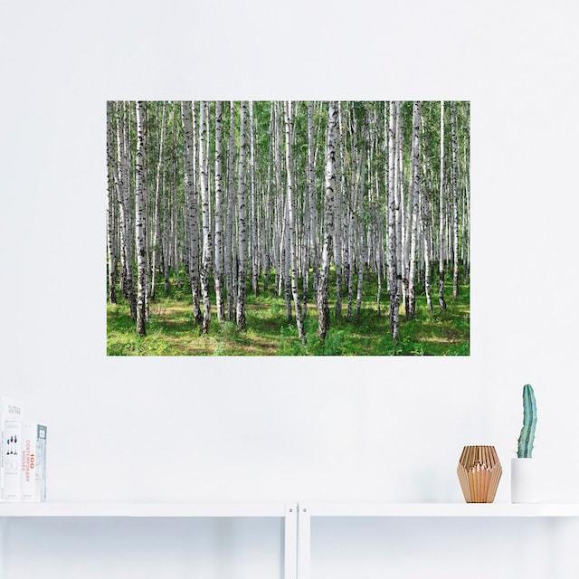Artland Wandbild »Birkenwald«