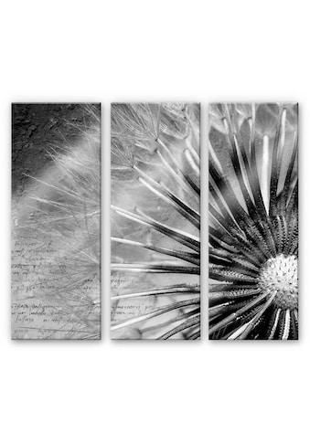 Wall-Art Mehrteilige Bilder »Pusteblumen Poesie (3-teilig)«, (Set, 3 St.) kaufen
